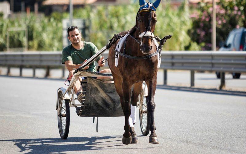 I migliori bookmaker per scommettere sui cavalli